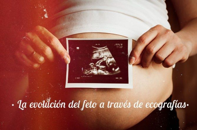 el desarrollo del embarazo semana a semana phalbm24844478 w670